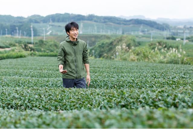 ひらの園 掛川茶 単一農家 生産者